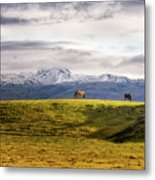 Icelandic Horses On The Countryside  Metal Print