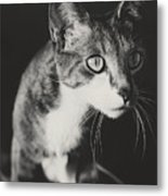 Ickis The Cat Metal Print