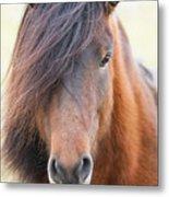 Iclelandic Horse Close Up Metal Print