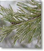 Icy Fingers Of The Pine Metal Print