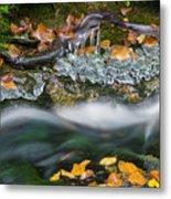 Icy Foliage Stream Metal Print