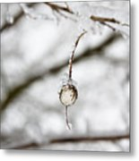 Icy Jewel Metal Print by Rebecca Cozart