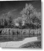 Icy Marsh Metal Print