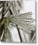 Icy Pines Metal Print
