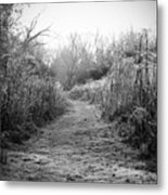 Icy Trail In Black And White Metal Print