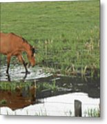 Idaho Farm Horse 2 Metal Print
