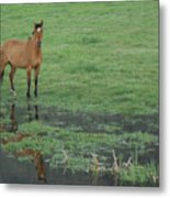 Idaho Farm Horse1 Metal Print