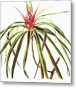 Ieie Plant Art Metal Print