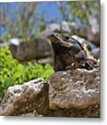 Iguana At Talum Ruins Mexico Metal Print