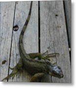 Iguana At The Ready Metal Print