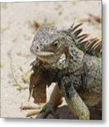 Iguana Sitting On A Sandy Beach In Aruba Metal Print