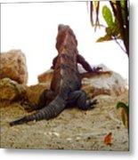 Iguana Watchout Metal Print