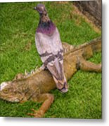 Iguana With Pigeon On Its Back Metal Print