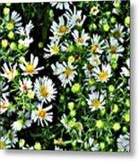 Illinois Wildflowers 1 Metal Print