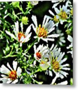 Illinois Wildflowers 3 Metal Print