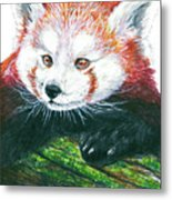 Illlustration Of Red Panda On Branch Drawn With Faber Castell Pi Metal Print