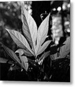 Illuminated Leaf, Black And White Metal Print