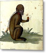 Illustration For A Book By Italian Scientist And Naturalist Ulisse Metal Print
