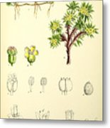 Illustrations Of The Flowering Plants And Ferns Of The Falkland Metal Print