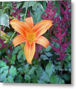 Image Included In Queen The Novel - Late Summer Blooming In Vermont 23of74 Enhanced Metal Print
