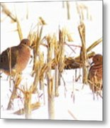 Img_0001 - Mourning Dove Metal Print