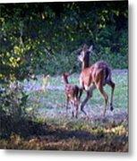 Img_0461-020 - White-tail Deer Metal Print
