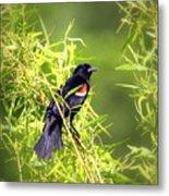 Img_0841-003 - Red-winged Blackbird Metal Print