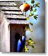 Img_1154 - Eastern Bluebird Metal Print