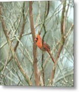 Img_1273-003 - Northern Cardinal Metal Print