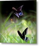 Img_1521 - Butterfly Metal Print