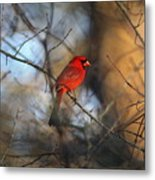 Img_2866-001 -  Northern Cardinal Metal Print