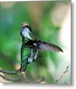 Img_4595-004 - Ruby-throated Hummingbird Metal Print