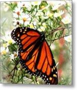 Img_5284-001 - Butterfly Metal Print