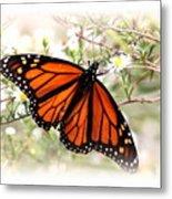 Img_5290-004 - Butterfly Metal Print