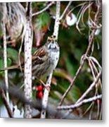 Img_6624-002 - White-throated Sparrow Metal Print