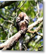 Img_7276 - Mourning  Dove Metal Print
