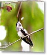 Img_7436-020 - Ruby-throated Hummingbird Metal Print