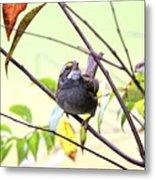 Img_7541-002 - White-throated Sparrow Metal Print