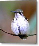 Img_8835 - Ruby-throated Hummingbird Metal Print