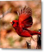 Img_8892 - Northern Cardinal Metal Print