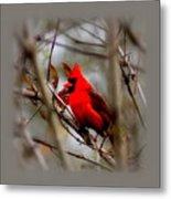 Img_9241 - Northern Cardinal Metal Print
