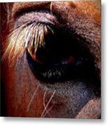 Img_9984 - Horse Metal Print