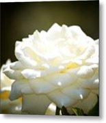 Immaculate Rose Metal Print