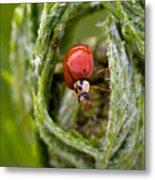 Imposter Ladybug Metal Print