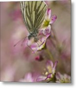 Impression With A Small Butterfly Metal Print