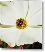 In A Bee's Life Metal Print