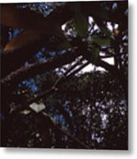 In A Brazilian Forest Metal Print