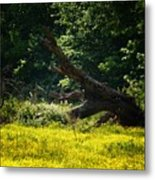 In A Field Of Gold Metal Print