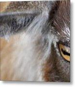 In A Goat's Eye Metal Print