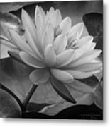 In A Mermaid's Garden - Monochrome Version Metal Print